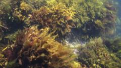 Close up of sea plants Stock Footage