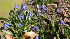flower-blue-nature - stock footage