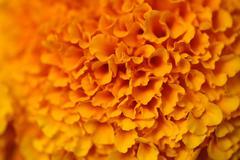 Colorful orange flower - stock photo