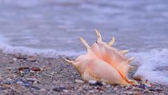 Seashell on the Beach Stock Footage