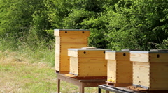 Beehives in a meadow. Stock Footage