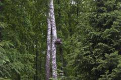 Wooden birdhouse (house with bird feeders) Kuvituskuvat