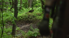 Downhill Mountain Biking - Forest Path Trail - stock footage
