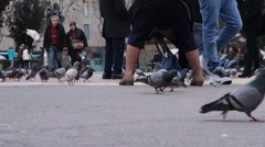 Spain-Barcelona-Pigeons on Square Stock Footage