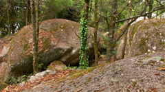 Wild Beech Forest and Huge Boulders Stock Footage
