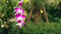 Orchid flowers in a garden with fresh and green background. Stock Footage