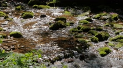 Idyllic forest scenery with creek and cascades #5 Stock Footage