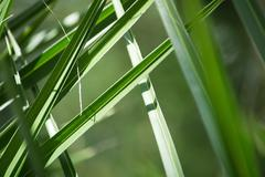 Palm leaves closeup - stock photo
