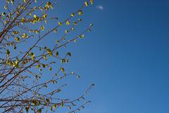Blue sky and new leaves - stock photo