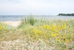 Stock Photo of Sandy beach and vegetation