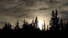 Moon and Trees Zoom Out Stock Footage