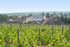 Stock Photo of idyllic scenery at the wine region Rheinhessen