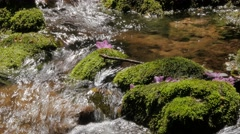 Idyllic forest scenery with creek and cascades #6 Stock Footage