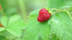 Close-up Of Hand Picking Ripe Strawberry - stock footage
