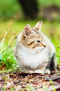Little kitten on the grass Stock Photos