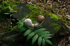 Foto of a 2 snails on stump in the wood - stock photo