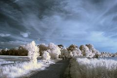 Stunning beautioful unique infra red landscape with false color impact - stock photo