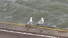 Two Adult Gulls Perch at the Edge of a Sea Wall at High Tide Stock Footage