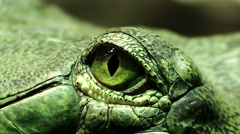 Eye of a reptile: green reptile, lizard, lizard, iguana, crocodile, snake Stock Footage