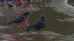 Ungraded: Rain Starting Stock Footage