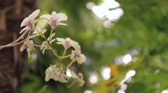 White orchid flowers in a garden with fresh and green background. Stock Footage