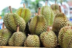 Durian nature fruit in southeast asia Stock Photos