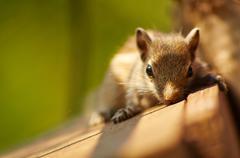 Baby Squirrel Posing Stock Photos