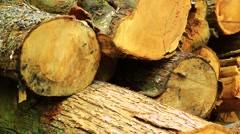 Felled timber close up Stock Footage