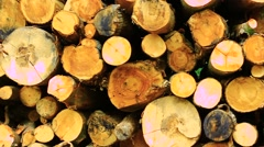 Timber in the woods Stock Footage