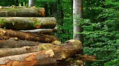 Felled timber in the woods Stock Footage