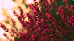 Intensive red flower Stock Footage