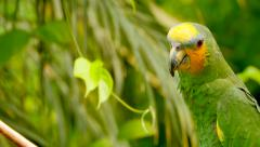 4K Exotic Green Parrot Medium Shot, Amazon Jungle Stock Footage