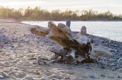 Snag on rocky Baltic sea beach Stock Photos