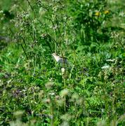small bird in lush green summer foliage - stock photo