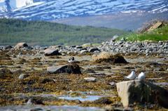 birds on sunny sea shore at low tide - stock photo