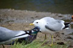 Vigilant seagull in summer Stock Photos