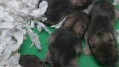 newly born mice 1 - stock footage