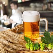 beer and hops and barley - stock photo