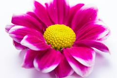 Soft abstract image of vivid flower Stock Photos