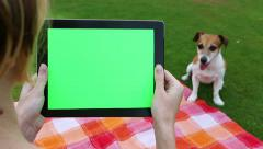 Dog lick green screen picnic Arkistovideo