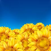 Field of sunflowers and blue sky. EPS 10 Stock Illustration