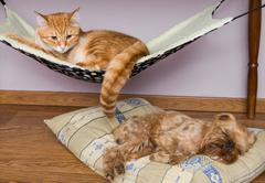 Cat and dog sleeping peacefully nearby Stock Photos