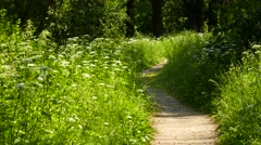 RUSSIA. MOSCOW - 2015: Path in the woods - stock footage