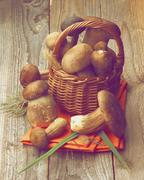 Boletus Mushrooms Stock Photos