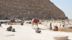 Walking Camel at the Base of the Pyramids in EGYPT Stock Footage