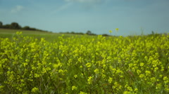 Yellow Flowers - stock footage