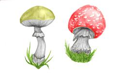 mushroom poison - stock illustration