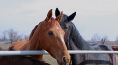 Horses rub noses against each other Stock Footage