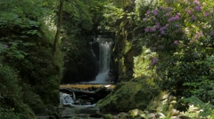Idyllic forest scenery with creek and cascades #10 Stock Footage