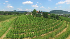 Beautiful aerial landscape of vineyard fields on hill in Slovenia. Stock Footage